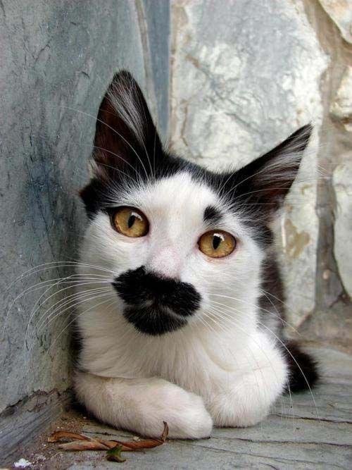 Mustache Face! (鬍子的臉)