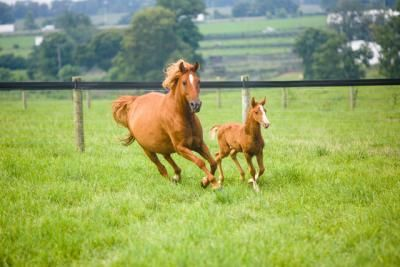 UK Ag Equine Programs to host equine showcase, breeders' short course | UK College of Agriculture News