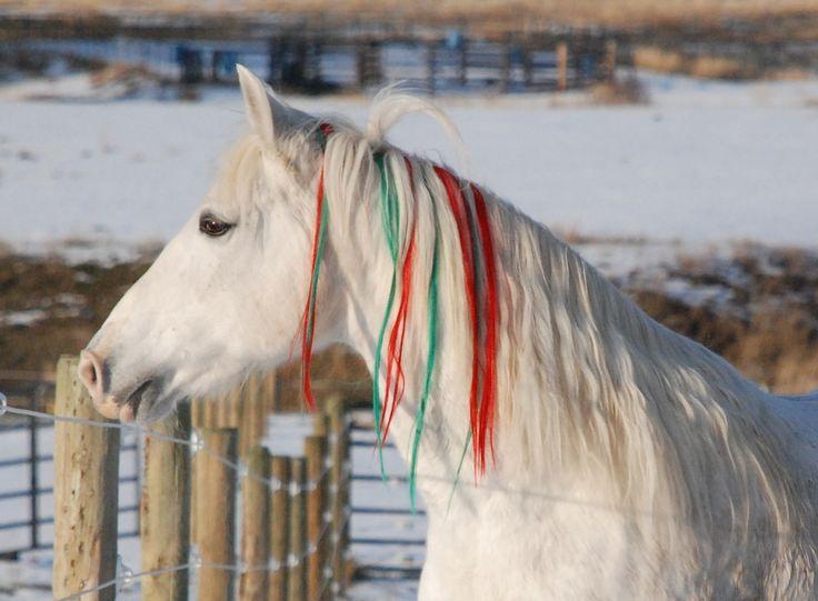 19 Best Pretty Horses Images On Pinterest Beautiful Horses Pretty
