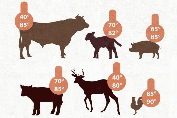 Korrekte Kerntemperaturen für allerlei Fleisch (ausführliche Tabellen)