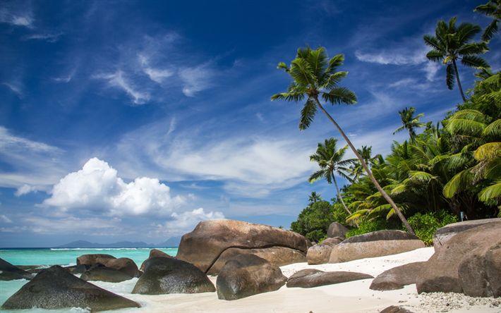 Scarica sfondi Spiaggia, Maldive, palme, sabbia, estate, mare