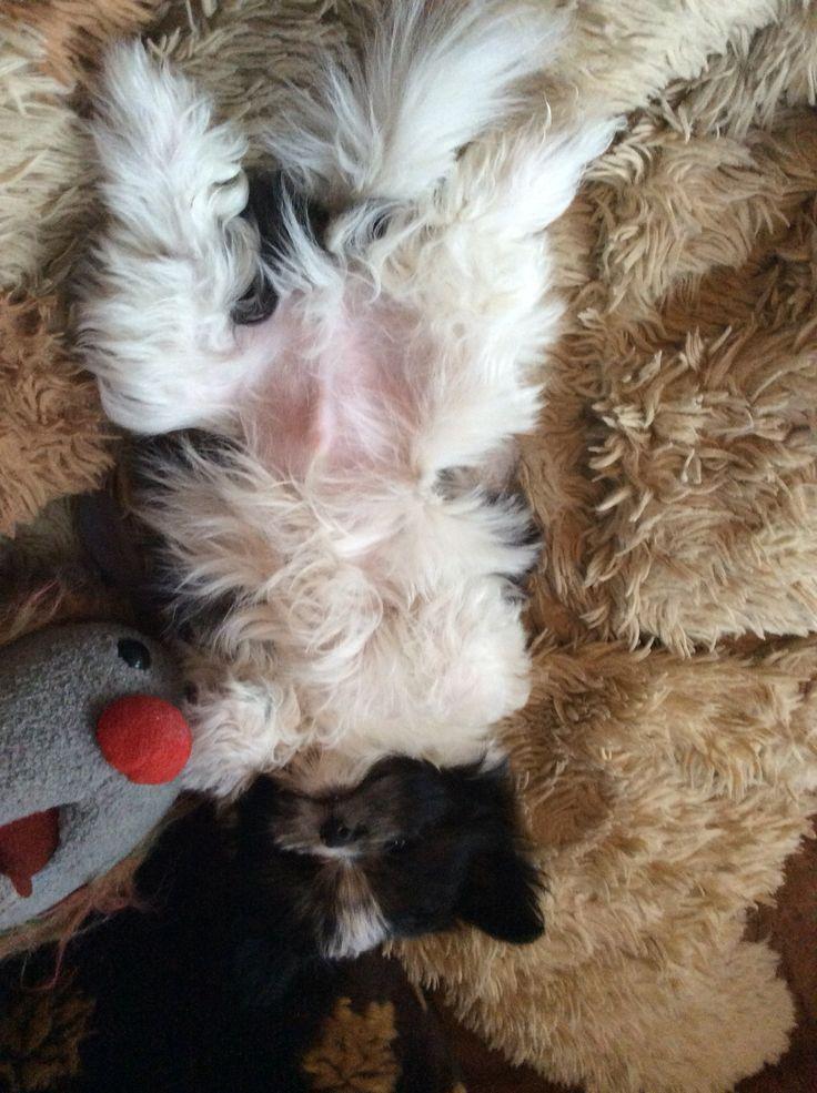 Ash! Sleepy puppy !!