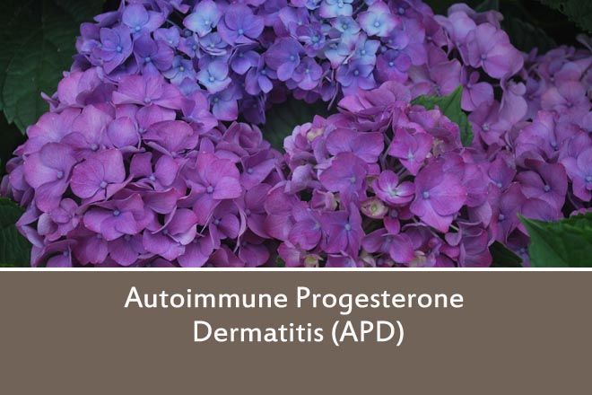 What isAutoimmune progesterone dermatitis (APD)? Autoimmune Progesterone Dermatitis (APD for short) is an allergic reaction to a woman's own progesterone that she produces. It can produce symptoms...