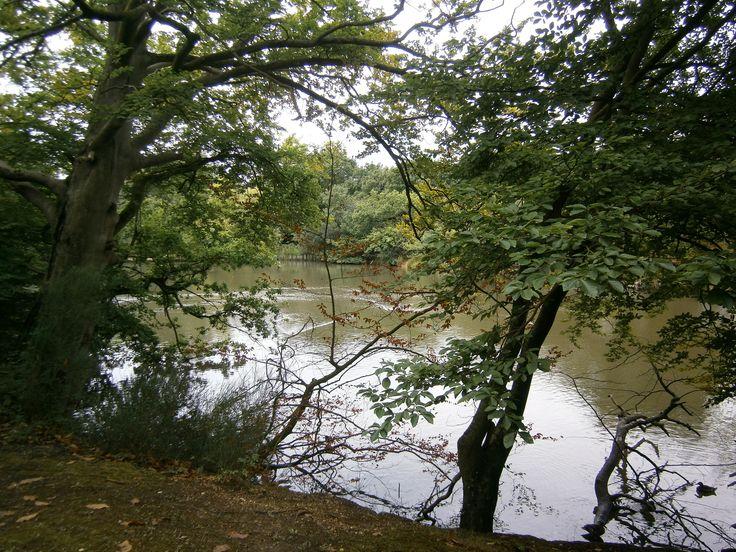 Danbury Lakes ,Essex