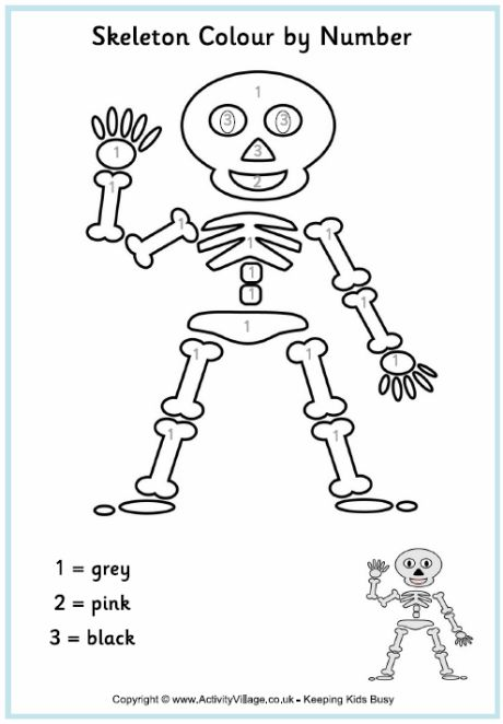 17 best TK Skeletons images on Pinterest Human body, The human - new coloring pages blood blood consists of plasma and formed elements