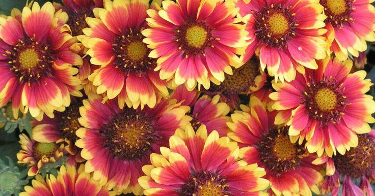 Rasen aussäen, Stauden teilen, Rosen düngen oder Zwiebelblumen pflanzen: Im September hat man im Ziergarten alle Hände voll zu tun. In unseren Gartentipps des Monats zeigen wir Ihnen die wichtigsten Arbeiten auf einen Blick.