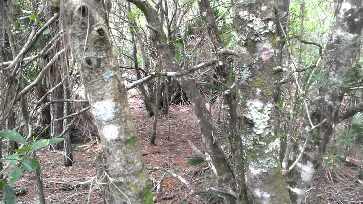 Fasano Bigfoot Research: The animal trail led to a swamp area with a strange structure.