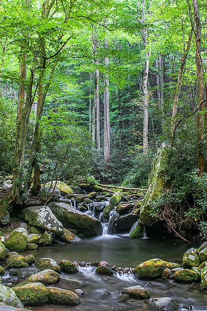 347 Best Great Smoky Mountains Images On Pinterest Smoky