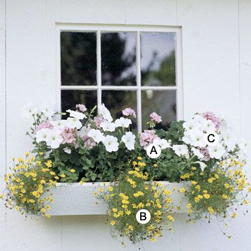 Window Boxes for Sun by Adding Color to a White Wall -- A. Geranium (Pelargonium 'Orbit Pink') + B. Swan River daisy (Brachyscome iberidifolia 'Lemon Mist') + C. Petunia Surfinia Patio White
