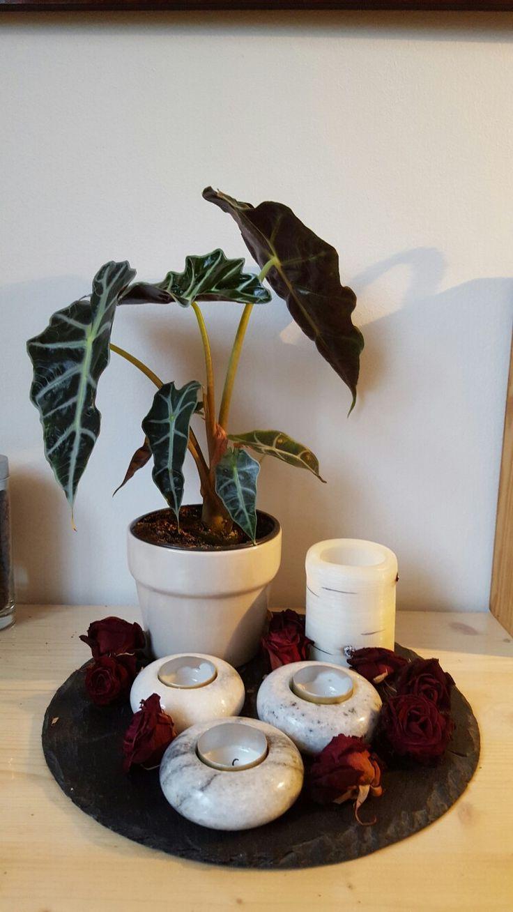 """Skiferplade med plante, fyrfadslys, bloklys """"birk"""" og tørrede roser"""