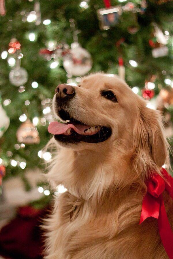 Beautiful Christmas golden