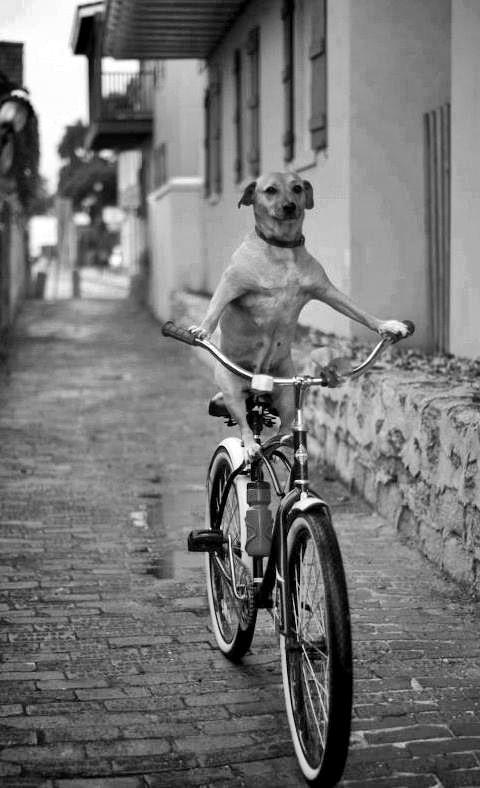 Casual bike ride around the neighborhood