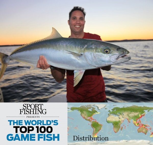 28 best yellowtail images on pinterest fishing peach for Best fishing in southern california