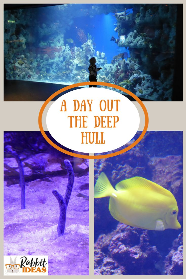 A Day out- The Deep- Hull - Rabbit Ideas