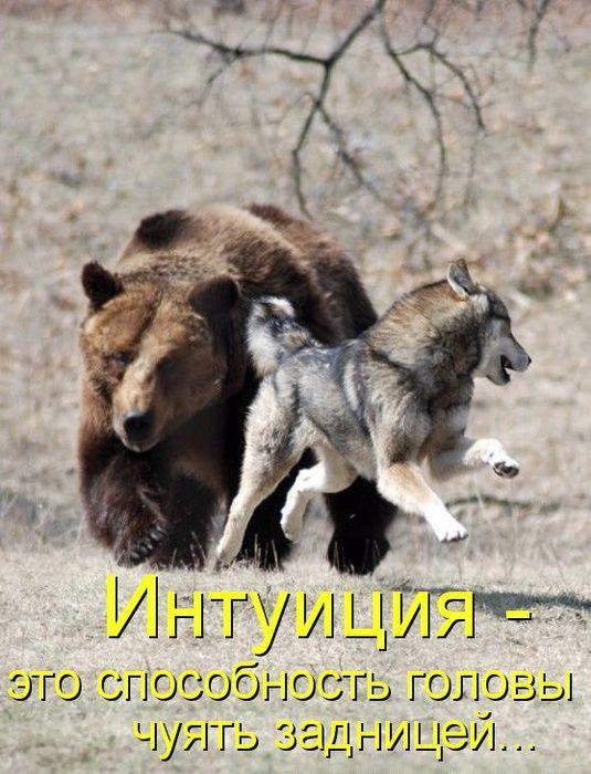 Юмор | Записи в рубрике Юмор | Мой дневник - мое богатство! : LiveInternet - Российский Сервис Онлайн-Дневников