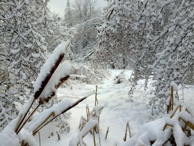 Gabor Palfy sent in this picture of the snow coating the trees in Toronto's Alamosa Park, an image that he described as