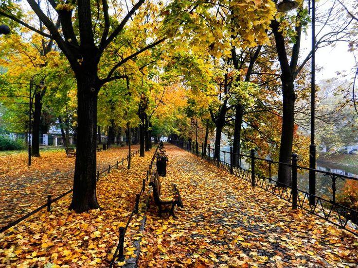 Jesień we Wrocławiu  _____________ #docelowo #jesien #jesień #pazdziernik #październik #park #liście #tb #tbt #park #walk #autumn #october #fall #autumnmood #wrocław #wroclaw #wroclove #instawroclaw #nature #trees #beautifull #vsco #vscogood #instamood #fog #naturelovers #zlotapolskajesien #złotapolskajesień