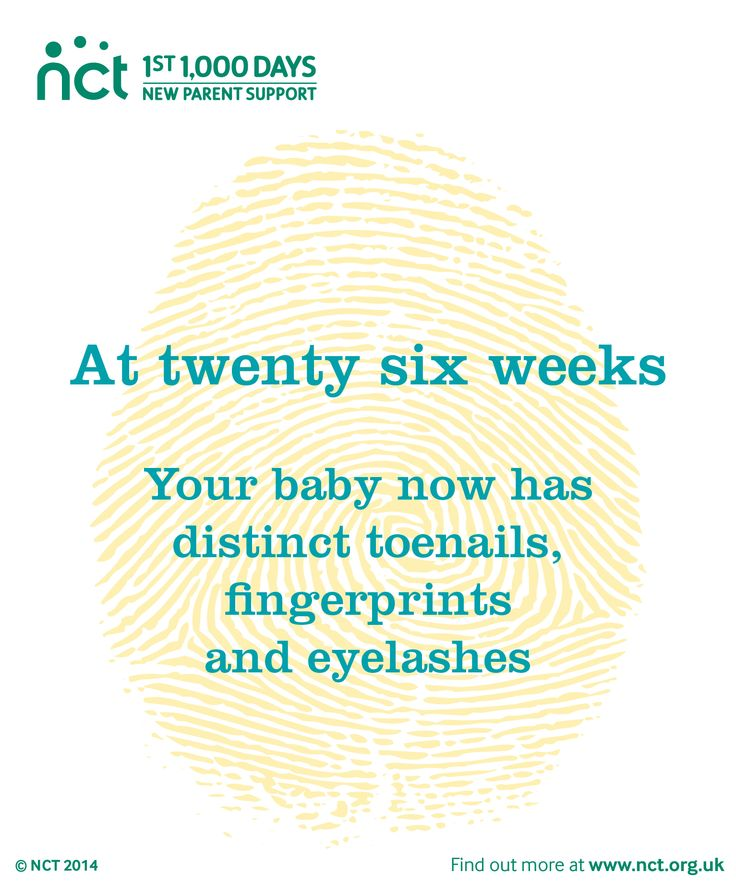 Now you're 26 weeks pregnant, your baby is growing fast. They're up by almost a centimetre from last week and will continue to grow in size and weight from now on. They now have distinct toenails, fingerprints and eyelashes as they get closer and closer to being completely formed.