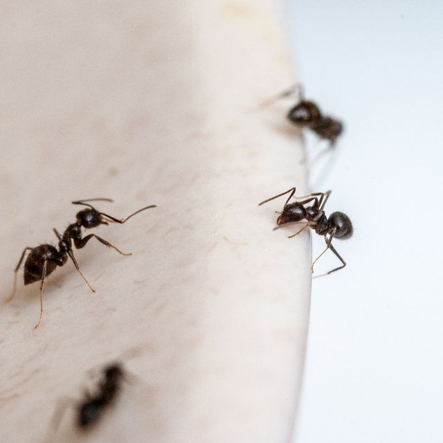how to kill small ants in the kitchen how to get the o