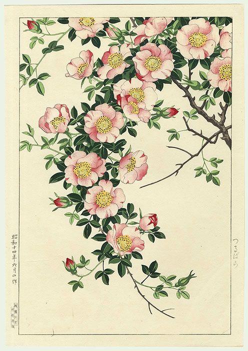 beautiful botanical illustration