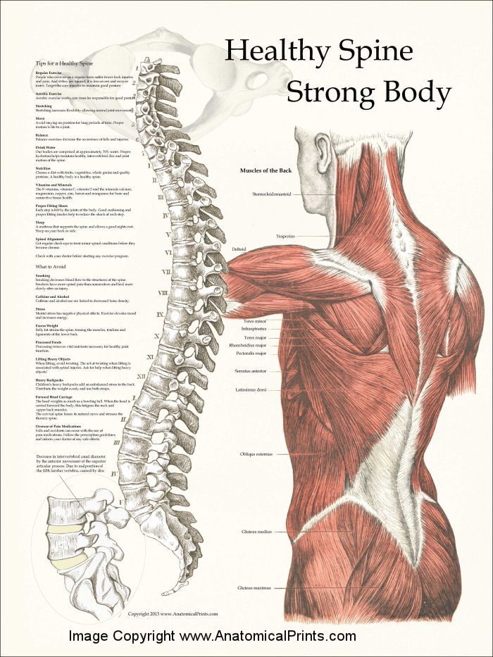 Healthy Spine / Strong Body Poster