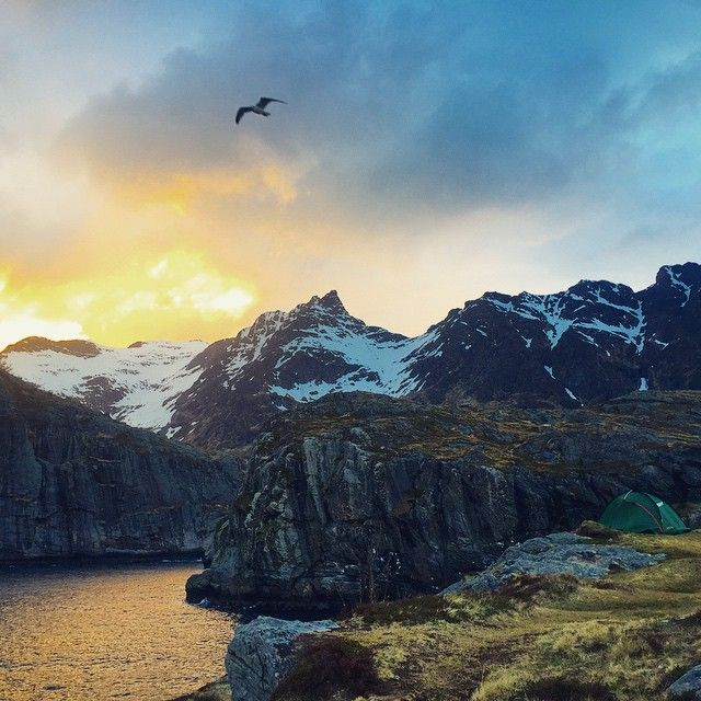 Images of Norway: #Camp along #Norway from Bergen up to Tromsø, this was my first time to #comeacross a #companion, at #end of the #land of #Å, #Moskenes, #Lofoten. #Perfect place for #camping, surrounded by #Ocean/ #SnowMountain/ #Seagull #soft #wind, and the sun never really go down at late May, but you can still got a #sunset like this at #midnight. #instaLofoten #instaNorway #Paradise #igersNorway #tent #adventure #adventurous #oceanview #dusk #birdy #village by woodylailai…