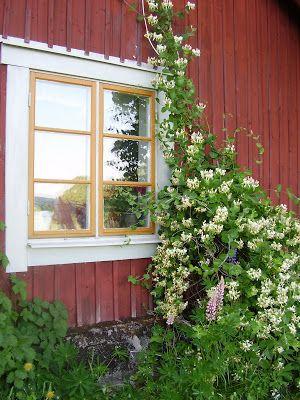 Elins Stuga: Trädgård och natur