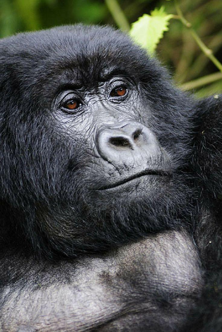 Best Zambia Safari Images On Pinterest Adventure Travel - 10 best safaris in africa
