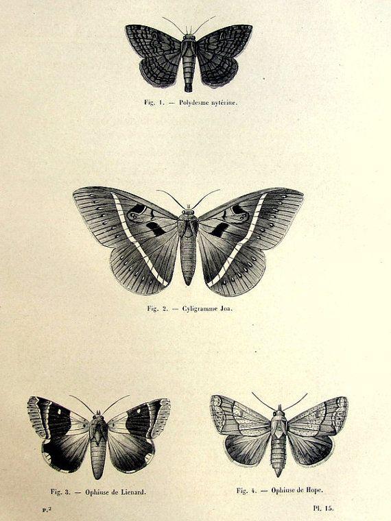 stampa 1860 originale falene, antico farfalla incisione, illustrazione di piastra papillon vintage di lepidotteri, insetti zoologia per telaio.