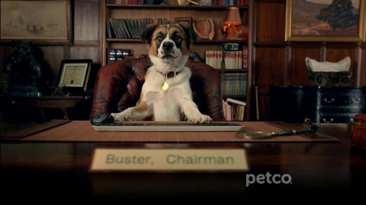 In this commercial, Chairman Buster wants humans to listen up. He says pets wants better nutrition. Save $5 on Blue Buffalo, Wellness and Natural Balance dog food with your Pals card. You can also earn 5% back on everything you buy with the PalsRewards program.