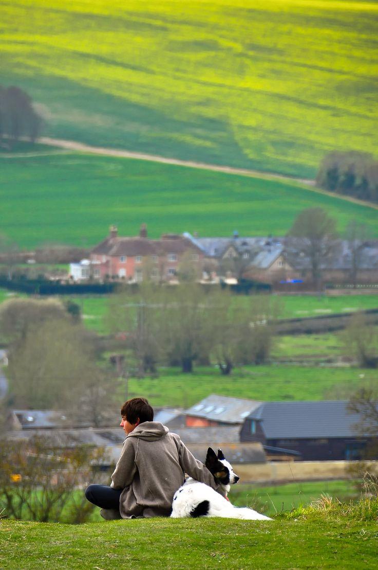 Loyal friends on a hill north of Salisbury, England.