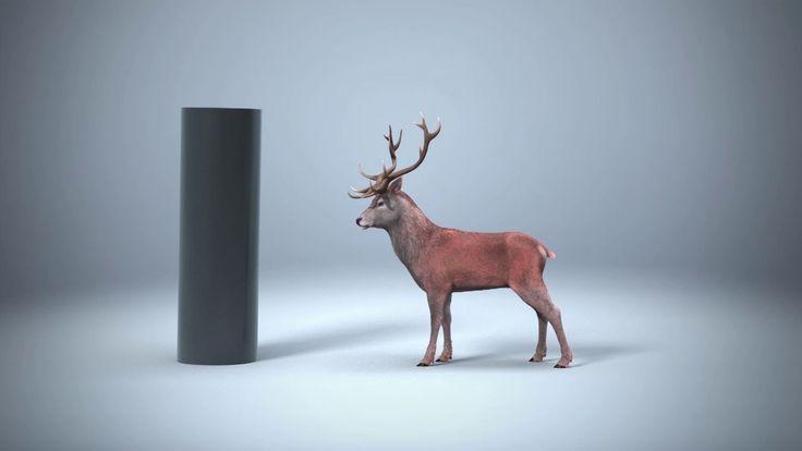 CG Deer  Early look dev on Vimeo