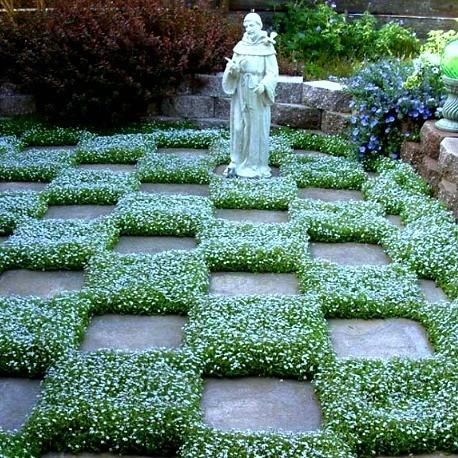 25+ Best Ideas about Ground Cover Plants on Pinterest ...