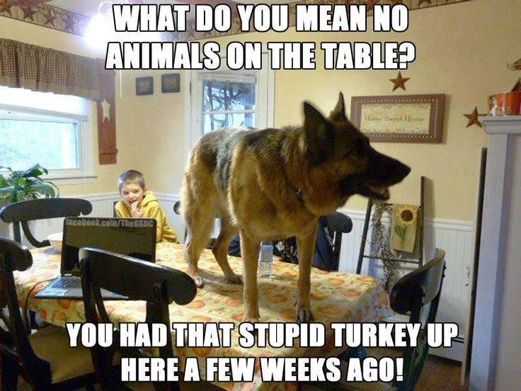 What do you mean no animals on the table? You had that stupid turkey up here a few weeks ago!
