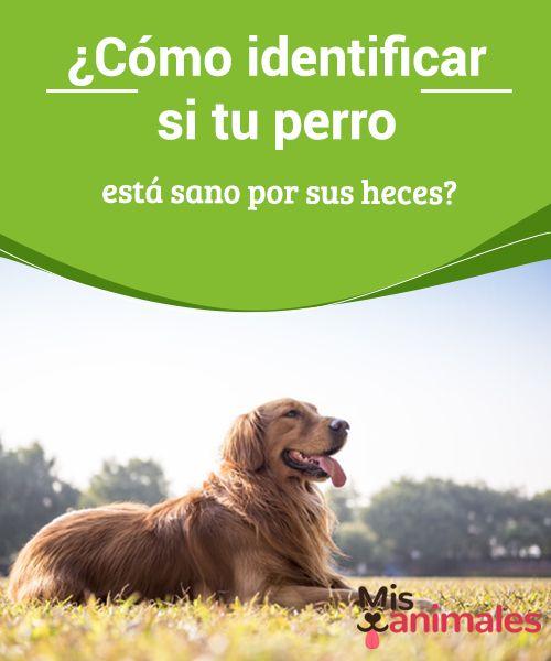 ¿Cómo identificar si tu #perro está sano por sus heces?  #Recoger la caca de tu #peludo no es, por cierto, una tarea divertida. Pero, además de una cuestión de higiene, es una acción que debes #realizar a diario, como ciudadano responsable que #vive en una comunidad.