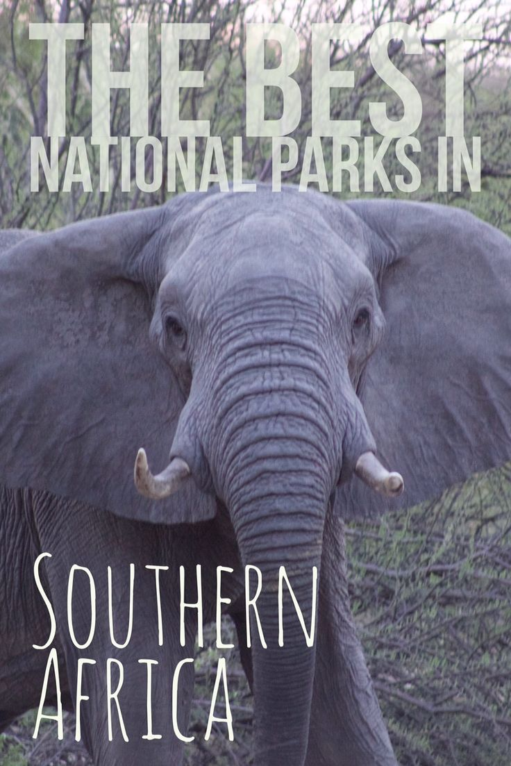 South Africa's Kruger, Namibia's Etosha, Zambia's South Luangwa park. Here are all the best national parks to visit in Southern Africa!