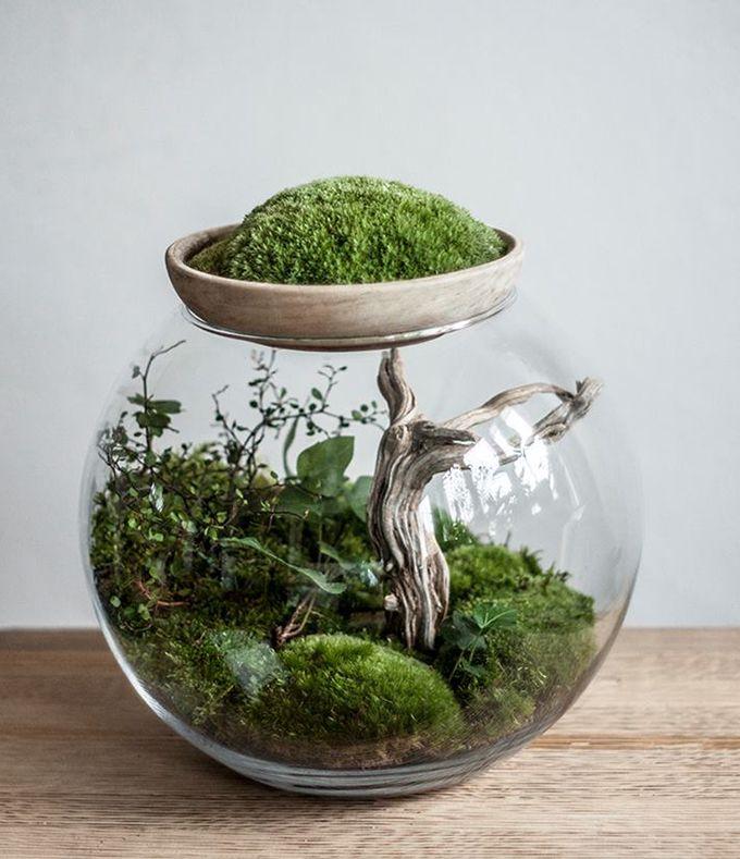 Rośliny doniczkowe i cięte kwiaty to element, który sprawia, że wnętrza nabierają życia i atmosfery. Co jeśli zamiast storczyka zapragniemy poziomki czy koniczyny? Teraz do grona żywych dekoracji dołączają leśne terraria.