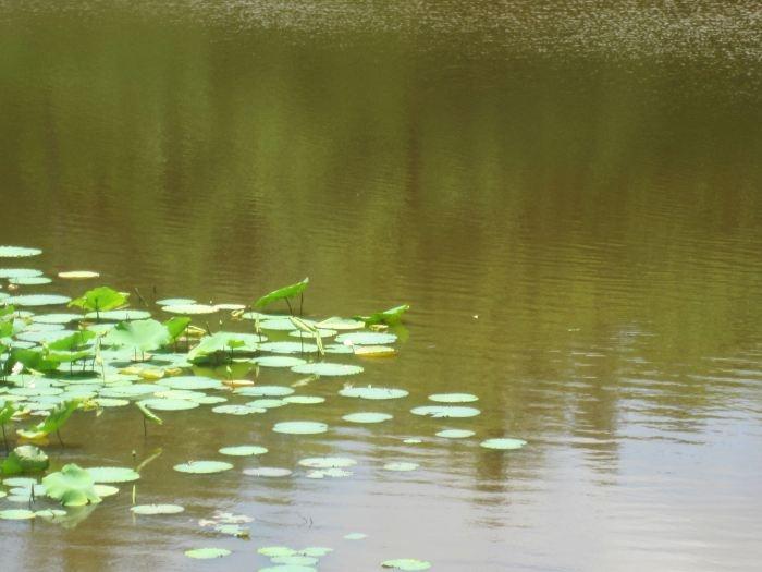 Elephant Lake, Hue, Vietnam