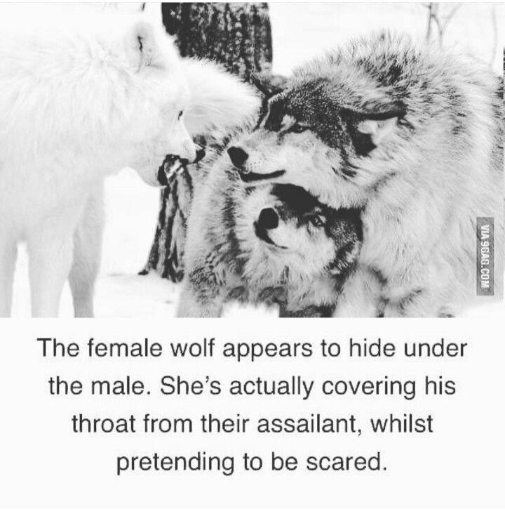 ˚°◦ღ...a true queen protects her king