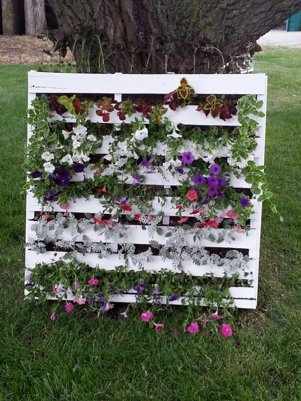 14 best images about flower beds on pinterest gardens for Flower beds out of pallets