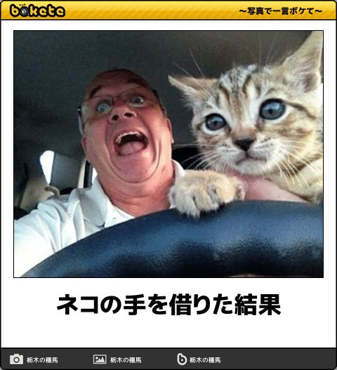 ネコの手を借りた結果