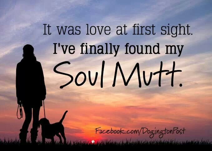 The perfect quote for all of the dog-lovers out there who have found their soul mutt. | The Secret Life of Pets | In Theaters July 8