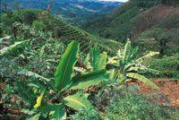 Las tierras deforestadas, especialmente las que est�n localizadas en terrenos con fuertes pendientes se erosionar�n en un corto tiempo y s�lo podr�n ser �tiles para unas pocas generaciones.