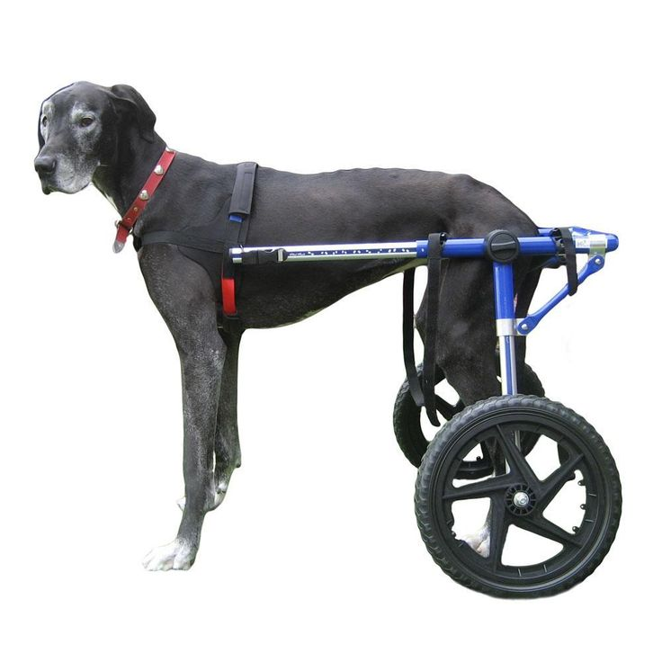 Dog wheelchair blue for large dogs 70180 lbs by