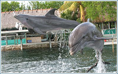 Island dolphin care, key largo. 2010, a special time we'll never forget x