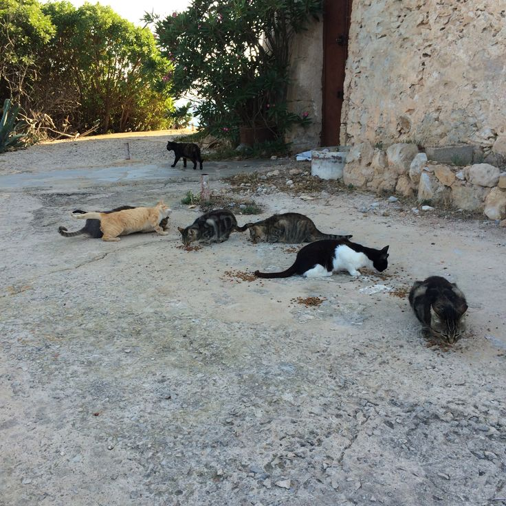 Stray cats. Porto Conte