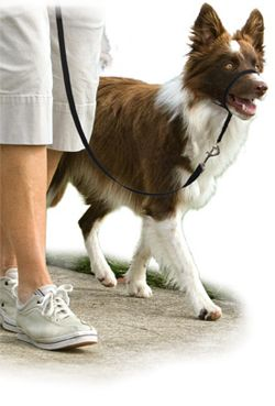 Gentle Leader by Petsafe - Visit dvm360.com/FearFree to learn more about Fear-Free veterinary visits