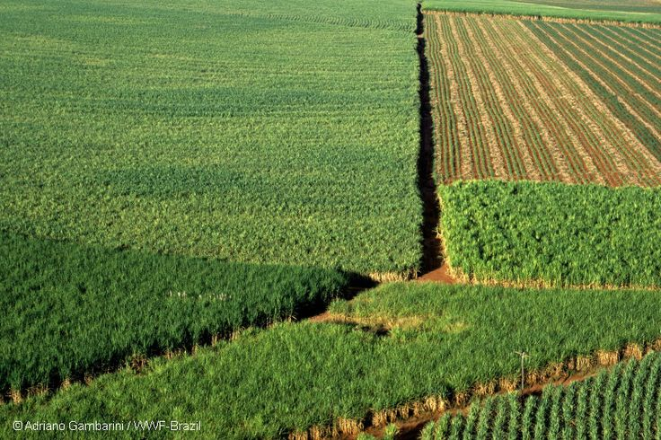 Did you know that large-scale cultivation of mono-crops such as sugarcane can reduce the amount of water available in rivers, wetlands and aquifers. These crops use more water than the natural vegetation and so the stream flow can be reduced. Sustainable farming of these crops needs to accommodate buffer zones around rivers and wetlands. https://www.facebook.com/WWFSA/posts/10151708978184364