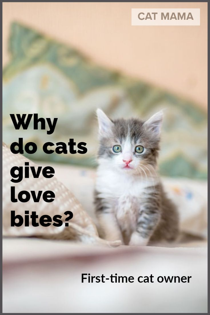 Do Cats Give Love Bites What Does It Mean When Your Cat Bites You In 2020 Cats Cat Biting Mama Cat
