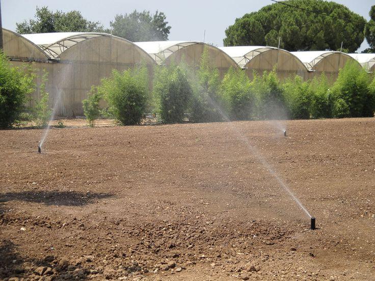 étude d'aspersion irrigation d'eau - Recherche Google